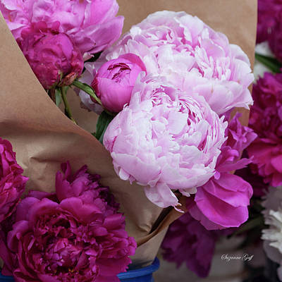 Photograph - Pink Peonies Squared by Suzanne Gaff
