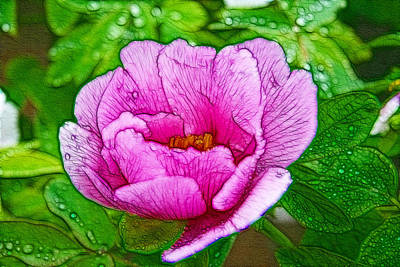 Pink Peony 1 Art Print by Lanjee Chee