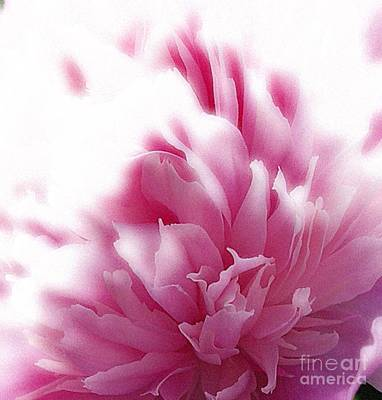 Pink Peony Art Print by Addie Hocynec