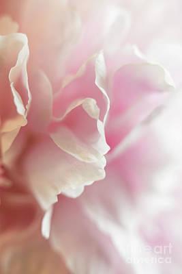 Photograph - Pink Peony by Elena Nosyreva
