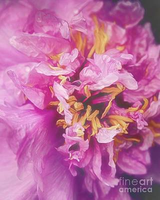 Photograph - Pink Peony Fireworks by Teresa Wilson