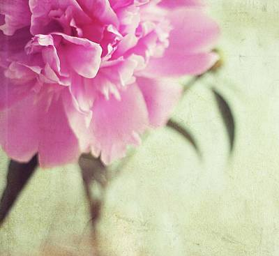 Pink Peony Flower Art Print by By Julie Mcinnes