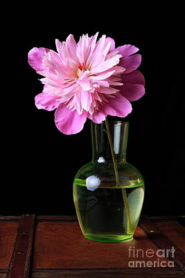 Glass Flowers Photograph - Pink Peony Flower In Vase by Edward Fielding