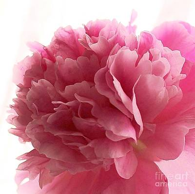 Photograph - Pink Peony by Katy Mei