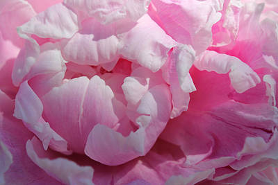 Photograph - Pink Peony by Lynne Guimond Sabean