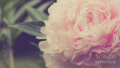 Photograph - Pink Peony Vintage Style by Edward Fielding