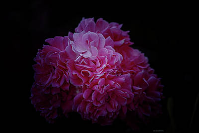 Photograph - Pink Perfection Floral by Roberta Byram