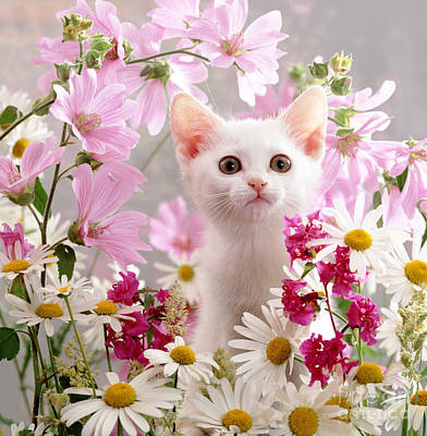 Photograph - Pink Petal Puss by Warren Photographic
