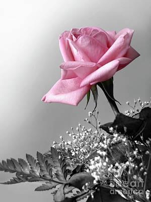 Pink Petals Art Print by Carlos Caetano