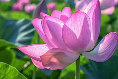 Photograph - Pink Petals by Cindy Lark Hartman