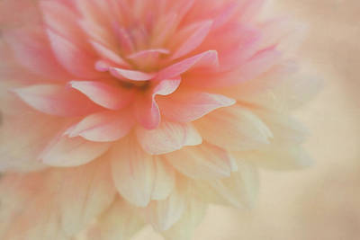 Photograph - Pink Petals by Kathleen Clemons