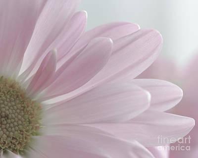 Photograph - Pink Petals by Linda Hoye