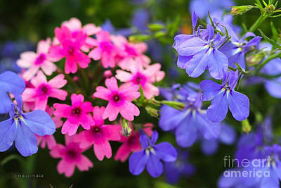 Pink Phlox And Violet Flowers Art Print by Corey Ford