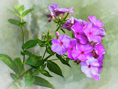 Pink Phlox - Paint Art Print by Steve Harrington