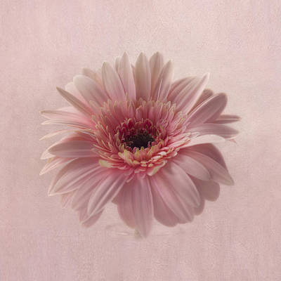 Photograph - Pink Pink Pink by Kim Hojnacki