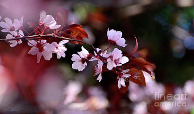 Photograph - Pink Plum Blossoms by Debby Pueschel