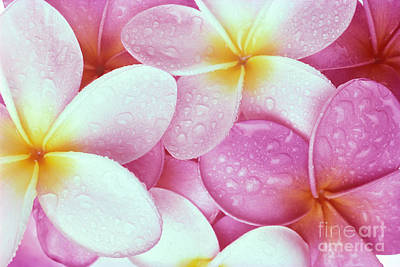Bed Spread Photograph - Pink Plumeria by Carl Shaneff - Printscapes