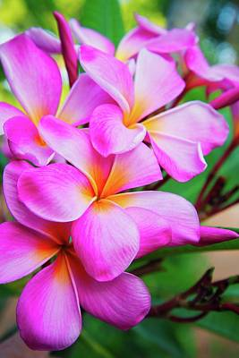 Photograph - Pink Plumeria Love by Lynn Bauer