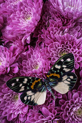 Pink Poms And Butterfly Art Print
