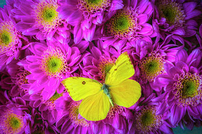 Photograph - Pink Poms And Yellow Butterfly by Garry Gay