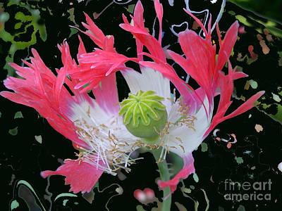 Pink Poppy Art Print by Addie Hocynec