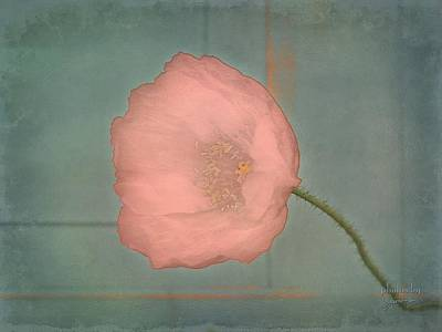 Photograph - Pink Poppy by Jamie Johnson