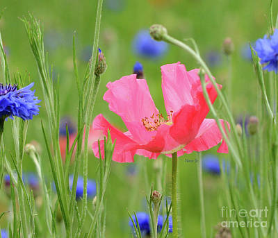 Photograph - Pink Poppy by Nava Thompson