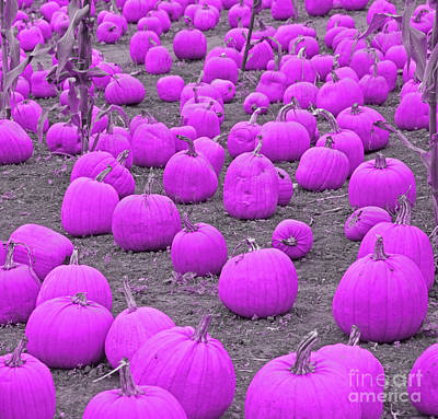 Photograph - Pink Pumpkin Patch by John Stephens