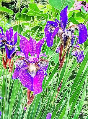 Painting - Pink Purple Irises by Anne Sands
