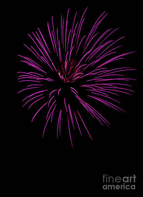 Photograph - Pink Pyrotechnics by Suzanne Luft