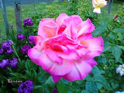 Photograph - Pink Queen Rose 2 by Sadie Reneau