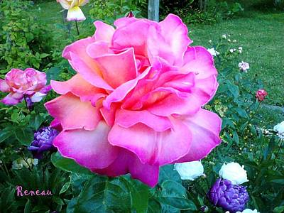 Photograph - Pink Queen Rose by Sadie Reneau