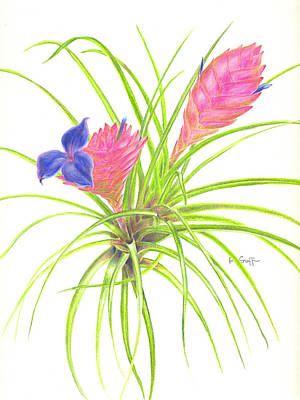 Epiphyte Painting - Pink Quill by Penrith Goff