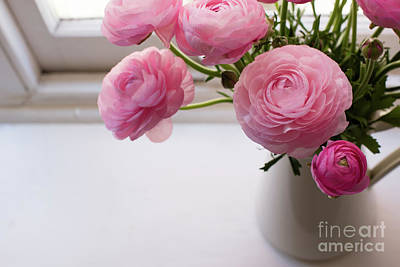 Photograph - Pink Ranunculus by Natalie Board