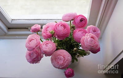 Photograph - Pink ranunuculus by the window by Natalie Board