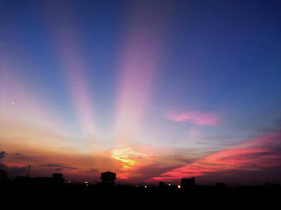 Photograph - Pink Rays by Atullya N Srivastava