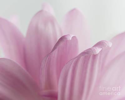 Pink Reach Art Print