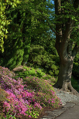Photograph - Pink Rhododendron In Garden by Jenny Rainbow