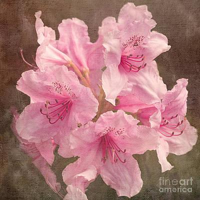 Photograph - Pink Rhododendron by Liz Alderdice