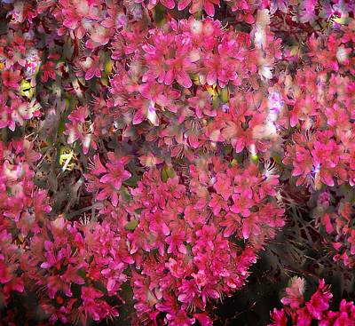 Photograph - Pink Rhododendron by Thom Zehrfeld