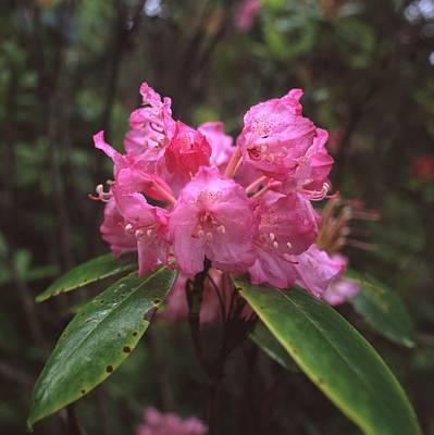 Photograph - Pink Roadie 1 by HW Kateley