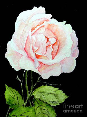 Painting - Pink Rose #1  by Carol Grimes