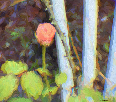 Painting - Pink Rose 1 by Cathy Jourdan