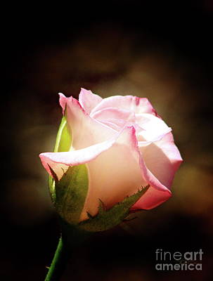 Photograph - Pink Rose 2 by Inspirational Photo Creations Audrey Taylor