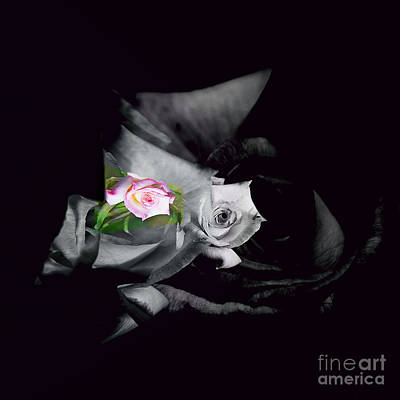 Pink Rose 2 Shades Of Grey Art Print