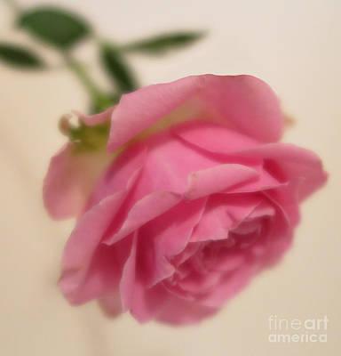 Photograph - Pink Rose 4 by Tara Shalton