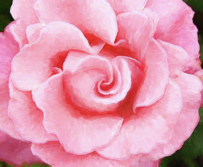 Photograph - Pink Rose by Allen Beatty