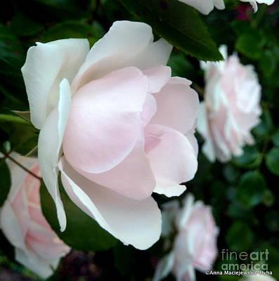 Folkartanna Photograph - Pink Rose  by Anna Folkartanna Maciejewska-Dyba