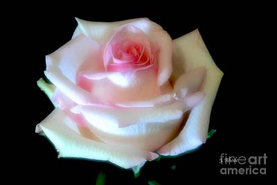 Pink Rose Bud Art Print by Jeannie Rhode