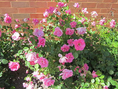 Food And Flowers Still Life - Pink Rose Bushes by Glenda Crigger